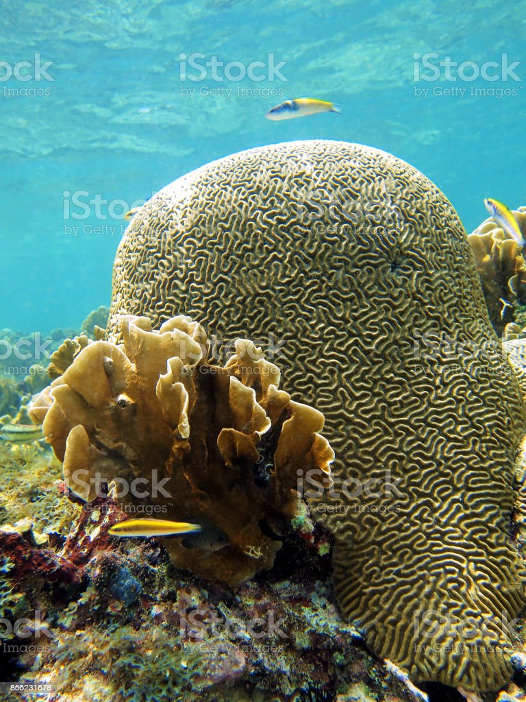 Brain coral and surface stock photo