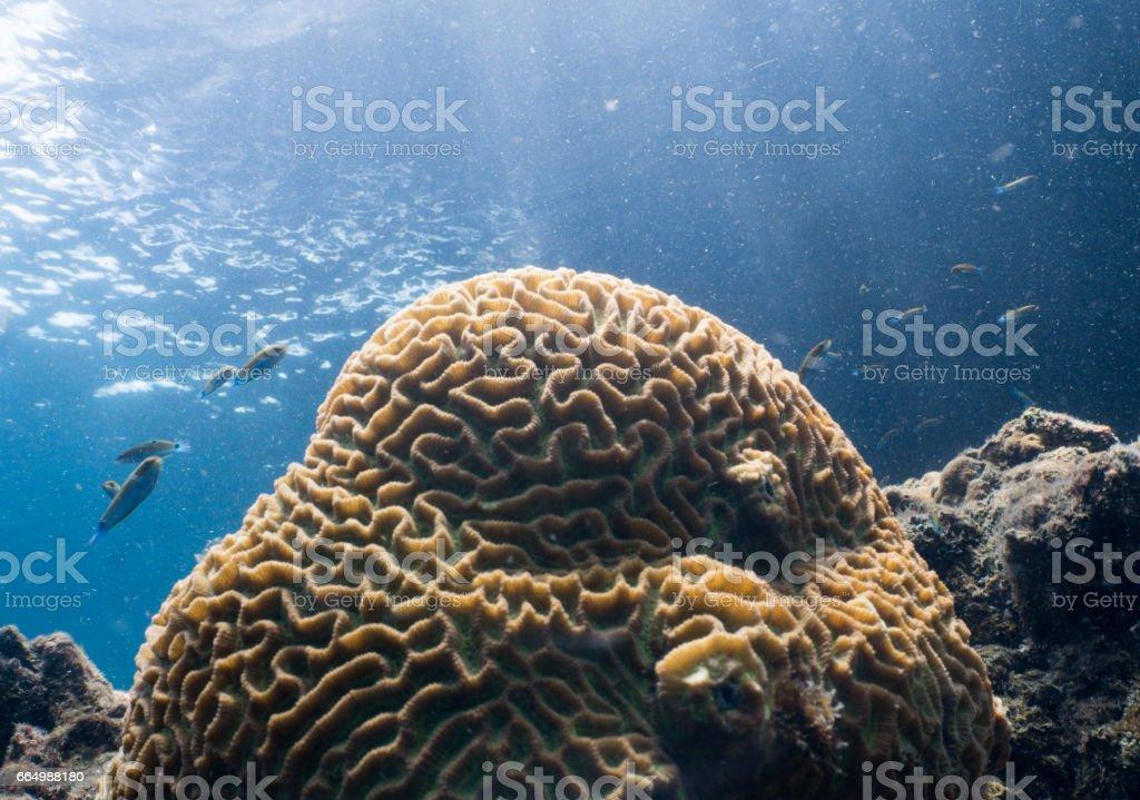 Famoso Anatomía Arrecife De Coral Foto - Imágenes de Anatomía Humana ...