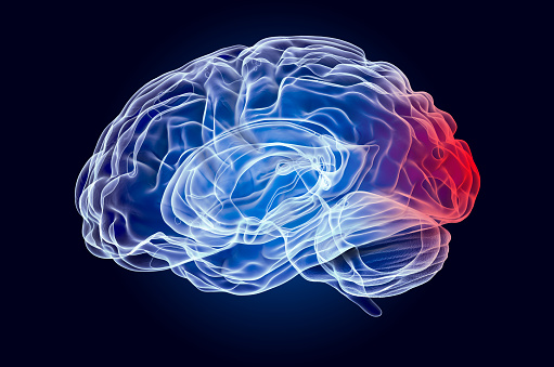 Brain Disease Of Occipital Lobe Concept 3d Rendering Stock ...