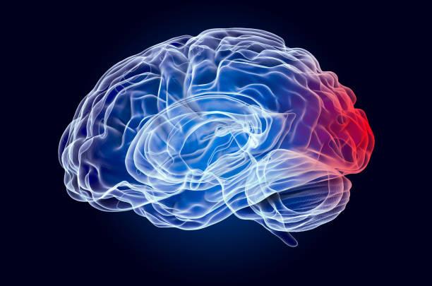 Brain, disease of occipital lobe concept. 3D rendering Brain, disease of occipital lobe concept. 3D rendering occipital lobe stock pictures, royalty-free photos & images
