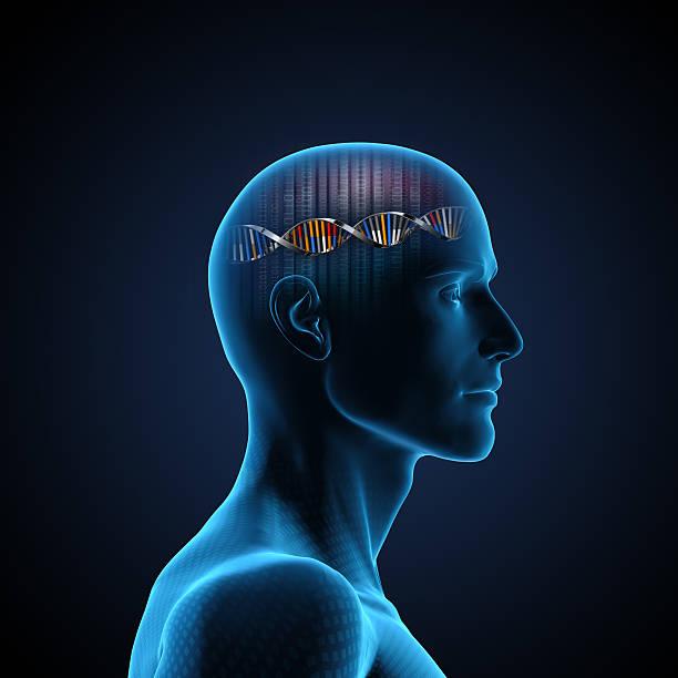 脳の DNA ストックフォト