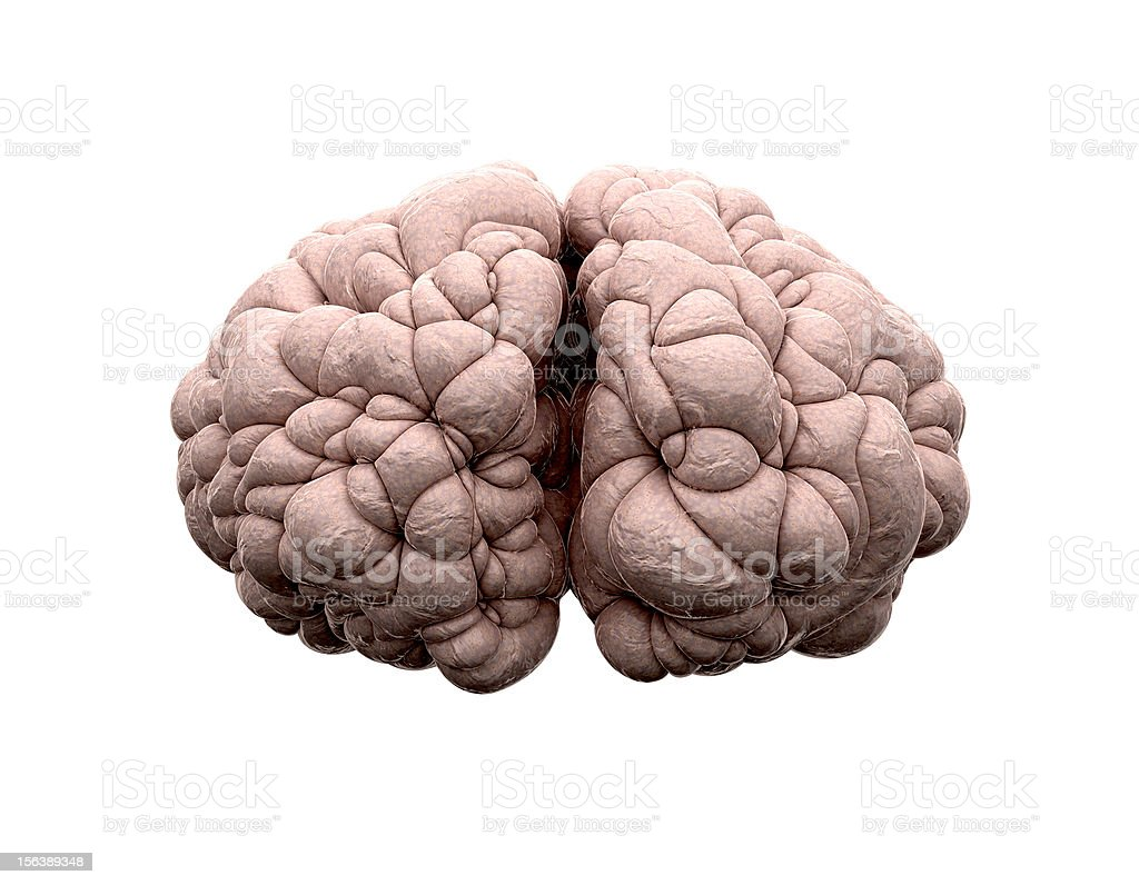 Brain Front View stock photo