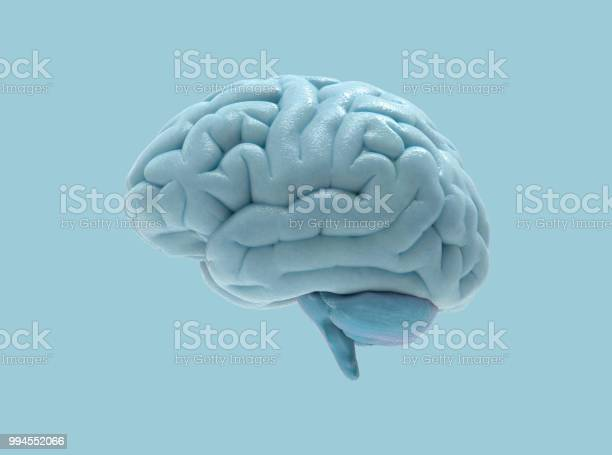 Brain illustration isolated on blue bg picture id994552066?b=1&k=6&m=994552066&s=612x612&h=60ftmex waip9zfwegazlztnl8zsnarte2c9p58aiia=