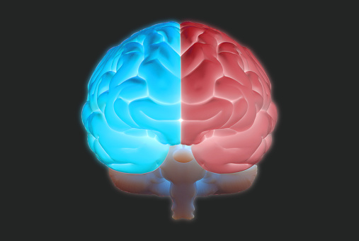 istock 3D brain illustration with left and right function concept 1131701233