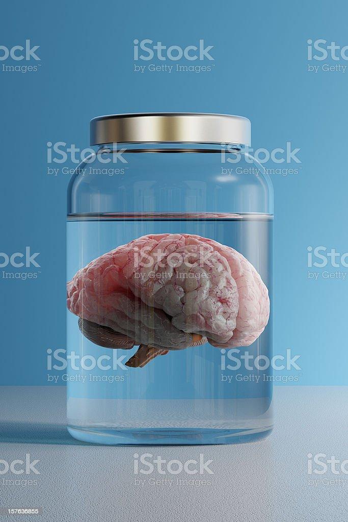 Brain in a Jar stock photo