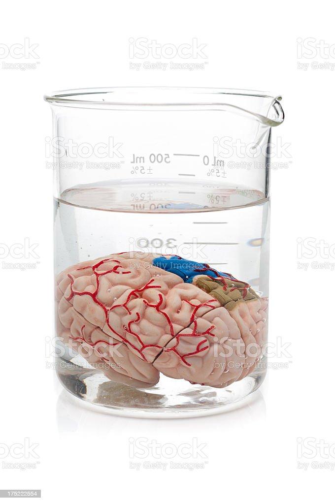 Brain in Beaker royalty-free stock photo
