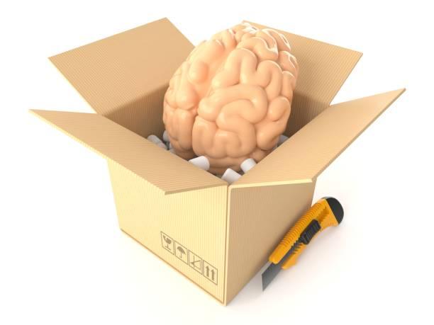 Brain inside cardboard box - foto stock