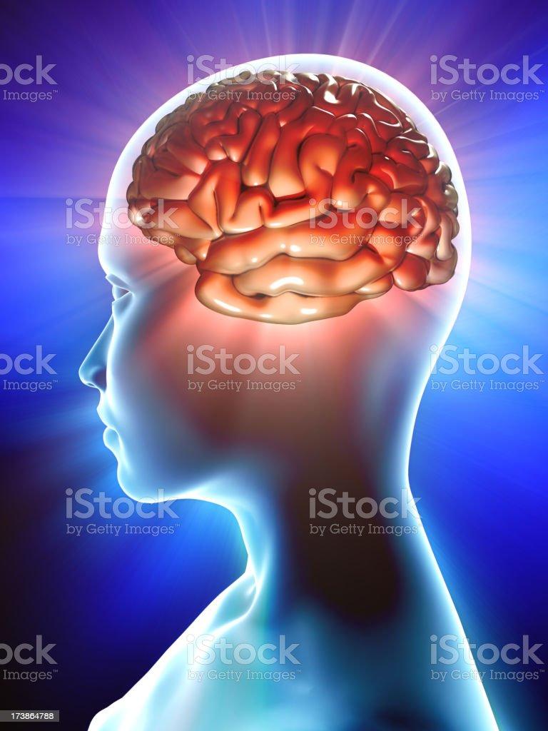 Brain inside profile of human stock photo