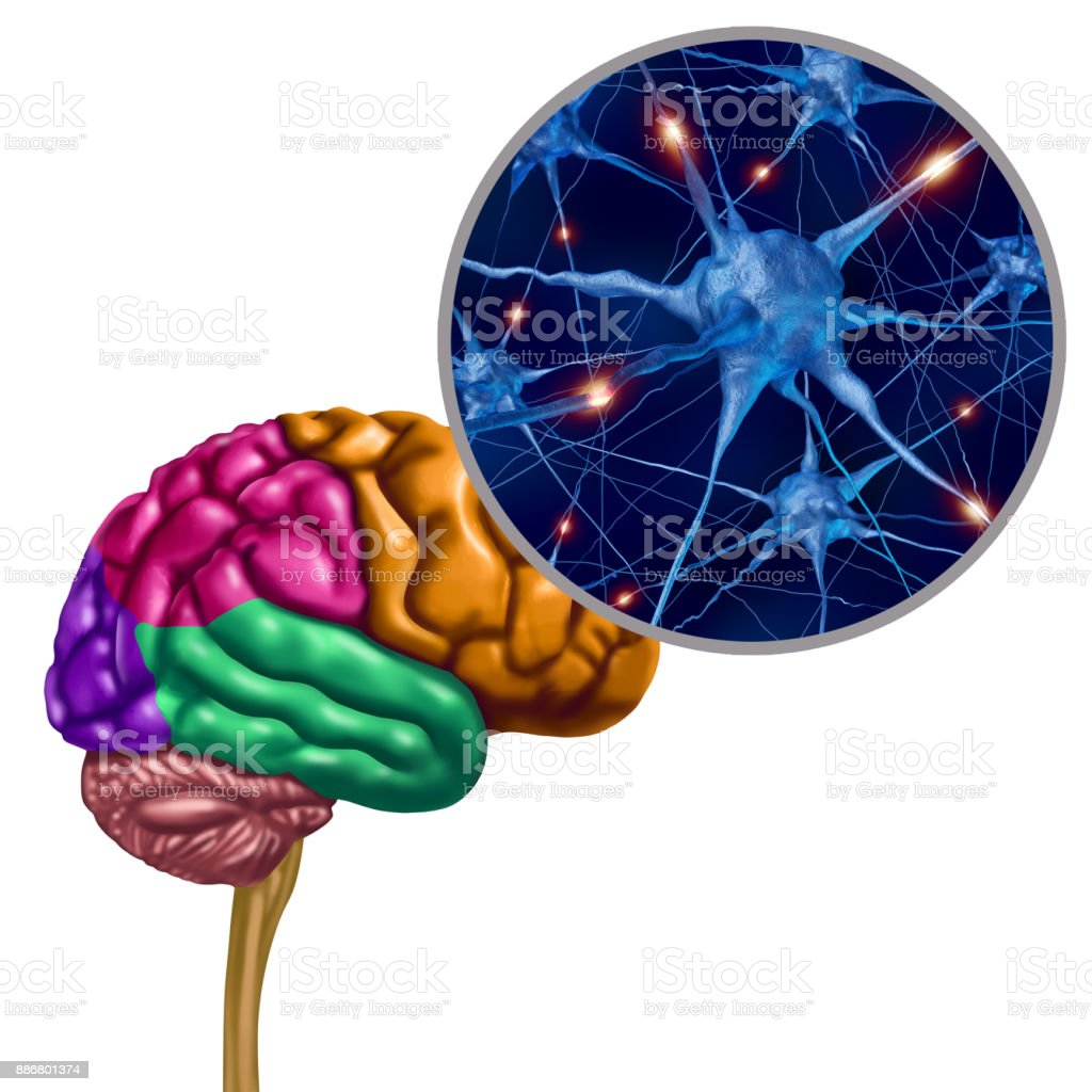 Brain Lobe Active Neurons stock photo
