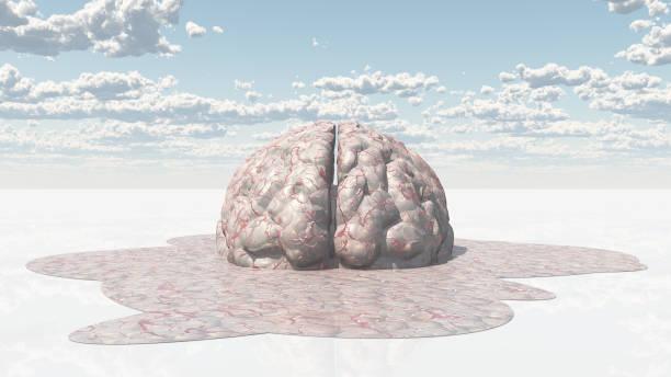 Brain Melt Brain Melt cerebellum stock pictures, royalty-free photos & images