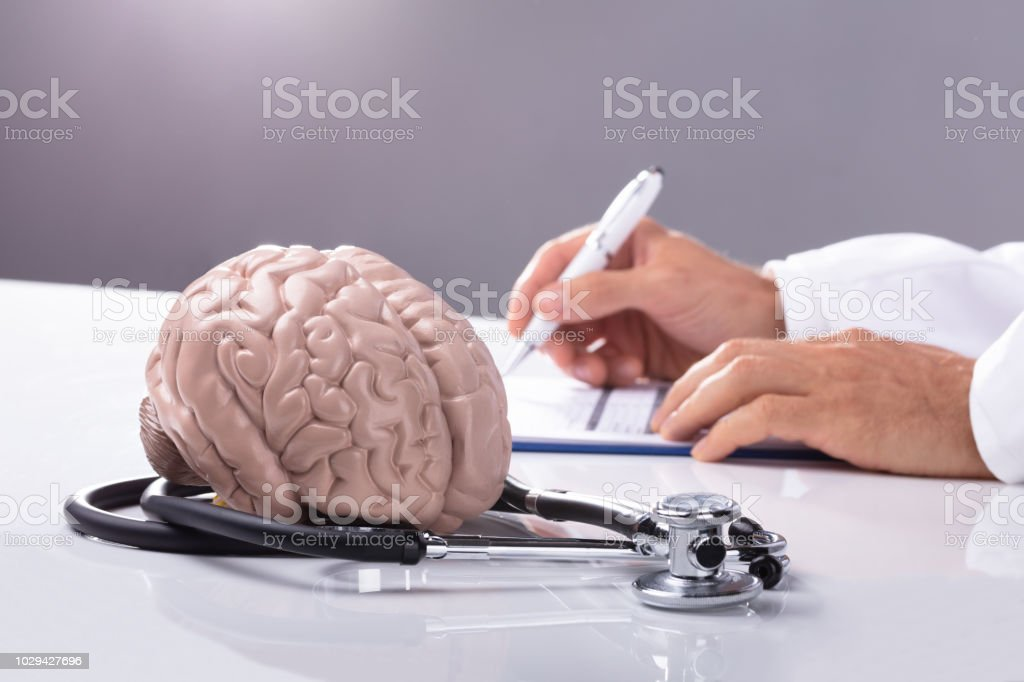 Brain Model And Stethoscope On Table Stock Photo - Download