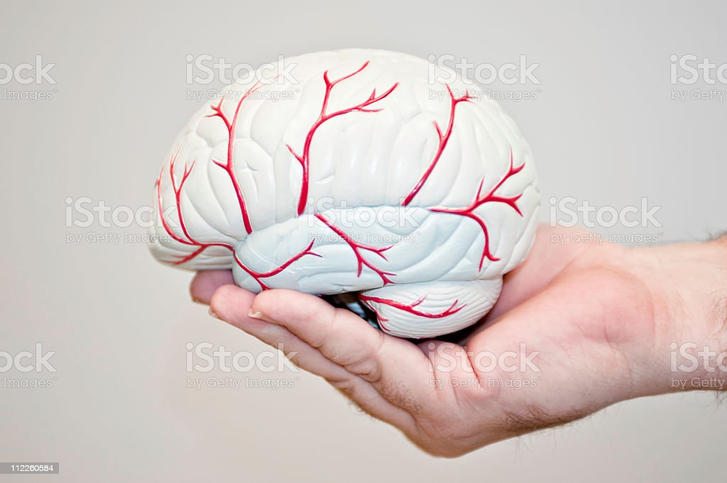Brain Model outside royalty-free stock photo