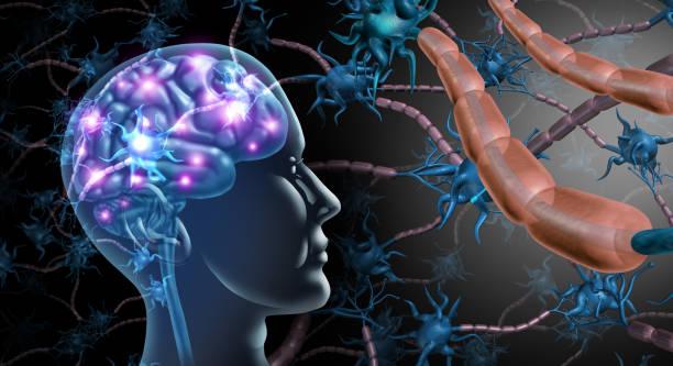 Brain Nerve Cells stock photo