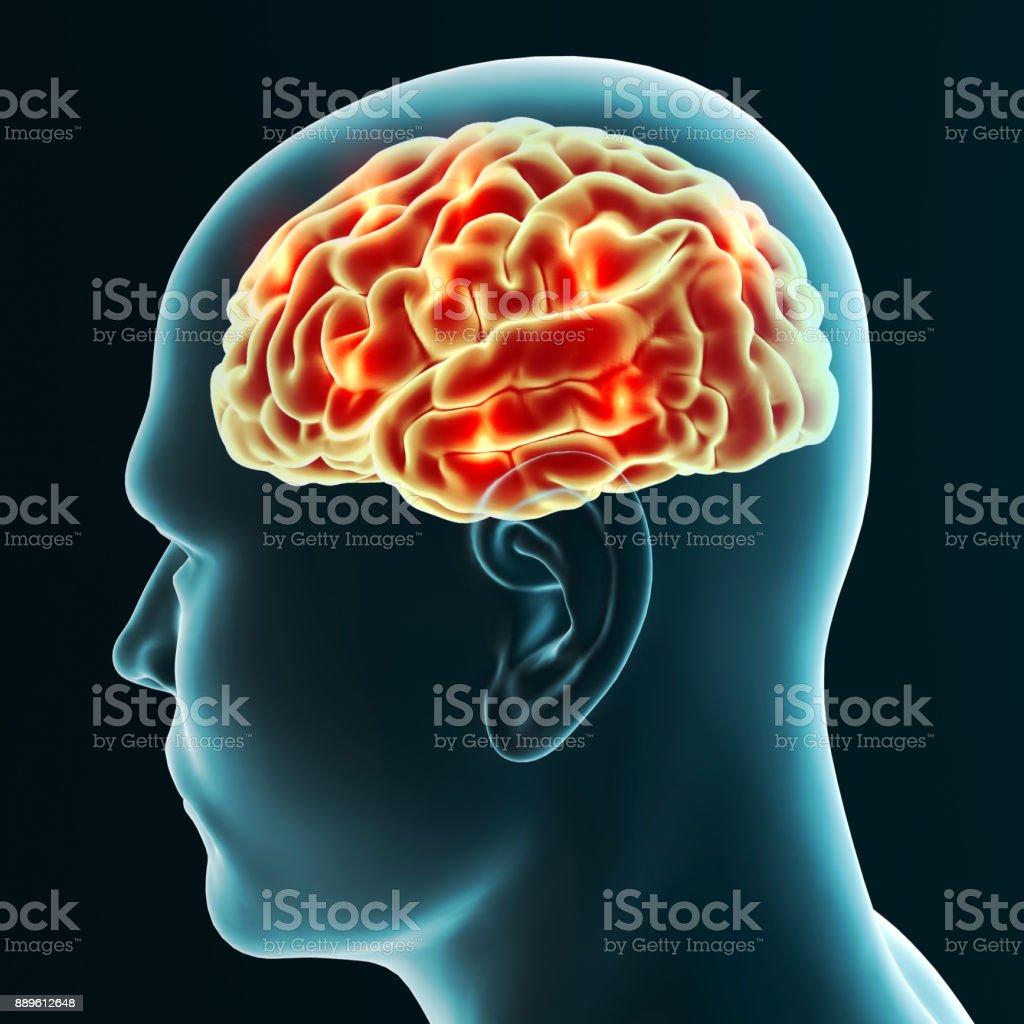 Gehirn, Neuronen, Synapsen, neuronales Netz Schaltung von Neuronen, degenerativen Erkrankungen, Parkinson, 3D-Rendering – Foto