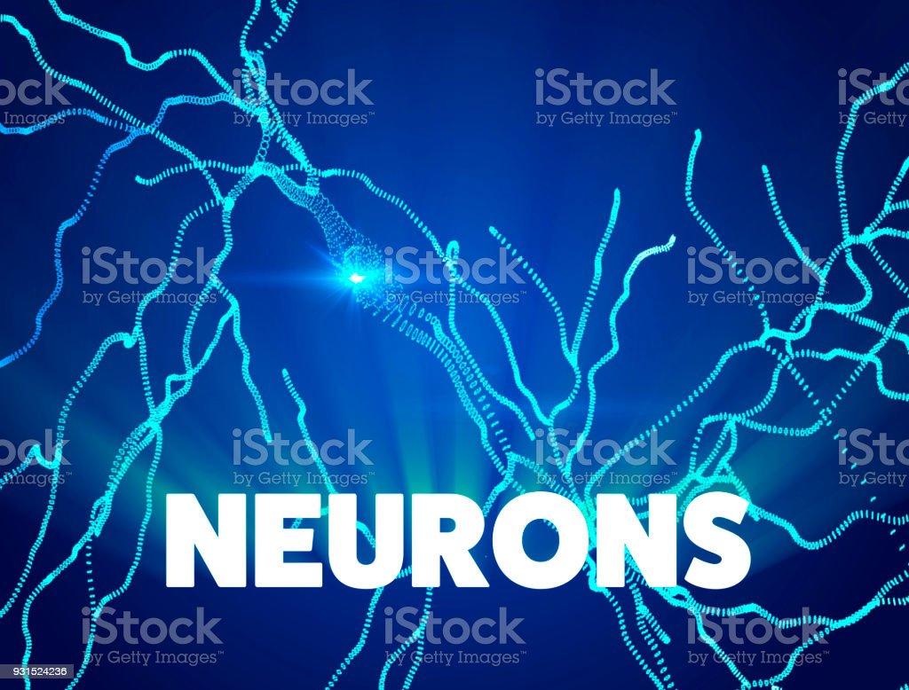 Circuito Neuronal : Fotografía de cerebro neuronas sinapsis circuito de la red