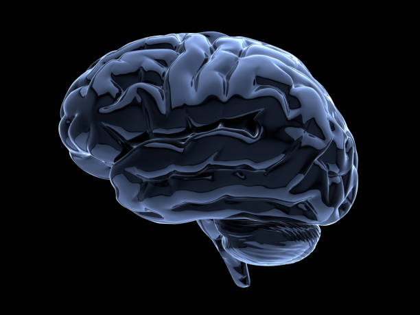brain on black stock photo