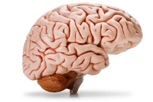istock Brain 182781752