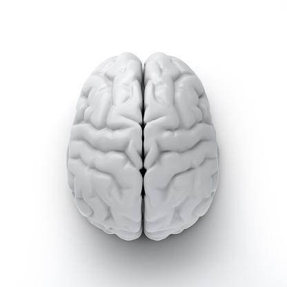 white brain isolated on white