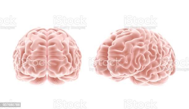 Brain picture id937685766?b=1&k=6&m=937685766&s=612x612&h=2crddsv8laxm1g1z38lim2fvk0jm3kdgrusnlfkcqt4=