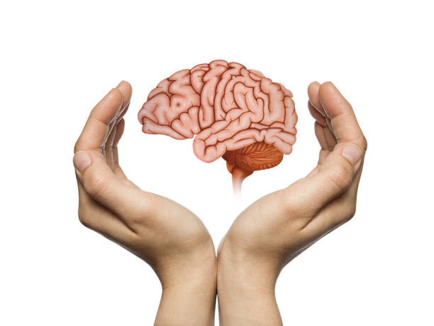 Brain protection and intellectual rights concept. stock photo