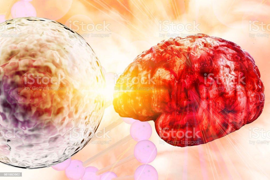 Brain Research Concept Clinic Laboratory Brain Study Stem