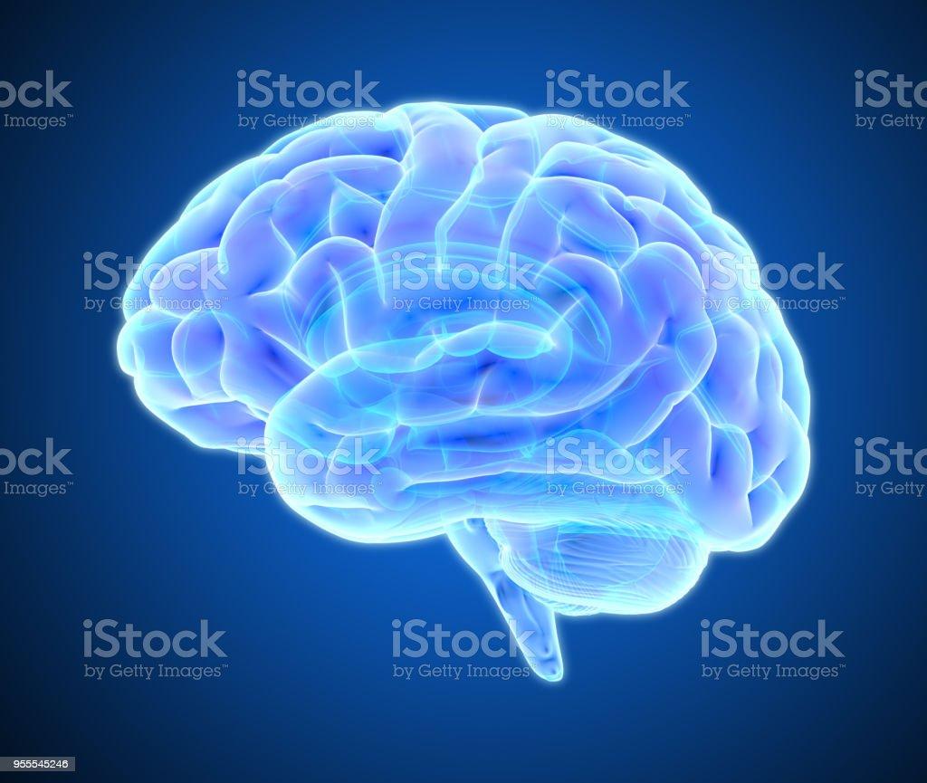 어두운 블루 BG에 고립 뇌 스캔 그림 - 로열티 프리 MRI 스캔 스톡 사진