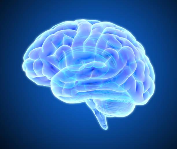 brain scan illustration isolated on dark blue bg - brain imagens e fotografias de stock