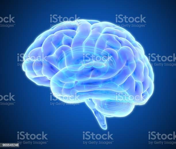 어두운 블루 Bg에 고립 뇌 스캔 그림 MRI 스캔에 대한 스톡 사진 및 기타 이미지