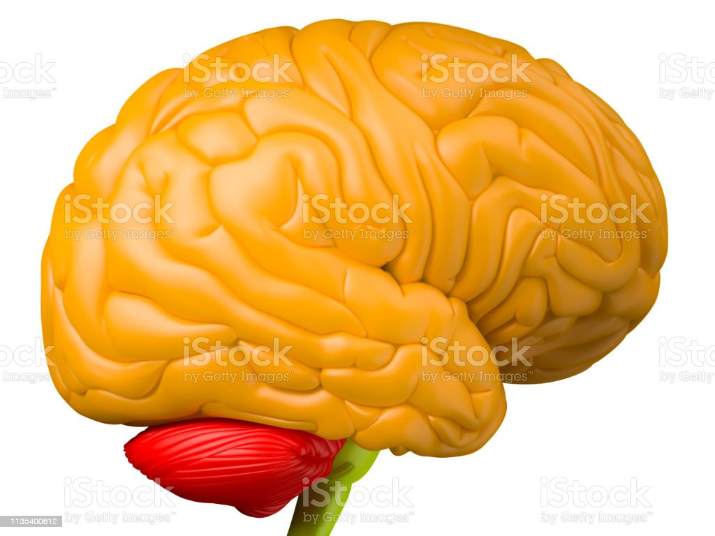 Brain side view stock photo