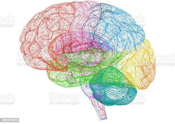 Brain sketch blueprint isolated picture id985916670?b=1&k=6&m=985916670&s=612x612&h=gujlyeddudbf3 xtfg8cke1vgddgydxcppv57jrfhbi=