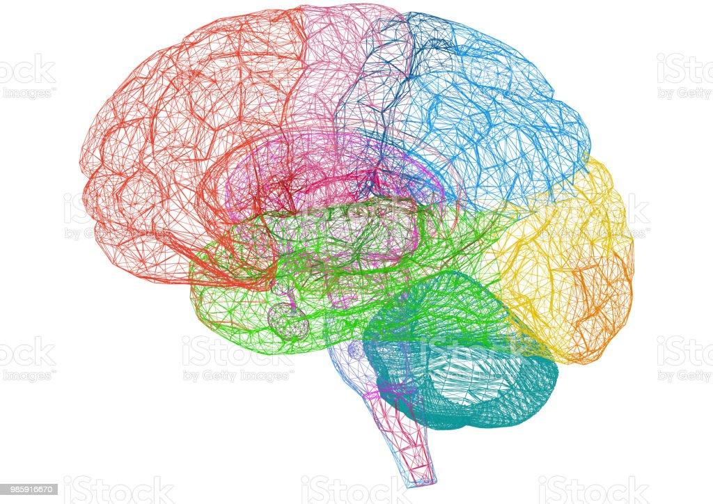 Gehirn Skizze – Blueprint - isoliert – Foto