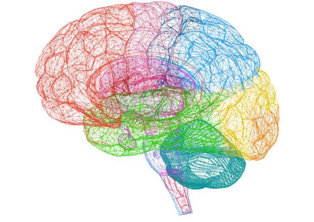 esboço do cérebro – blueprint - isolado - brain - fotografias e filmes do acervo