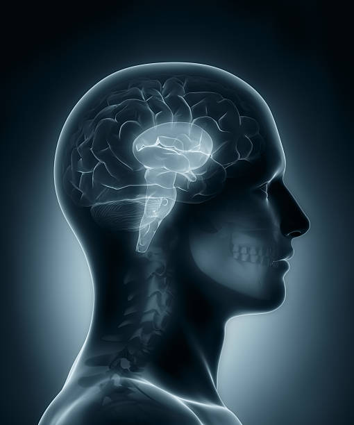 Brain stem medical x-ray scan stock photo