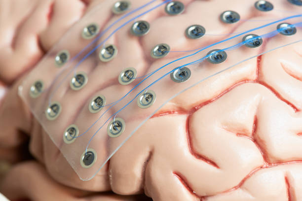 Brain waves recording electrodes on brain model surface stock photo
