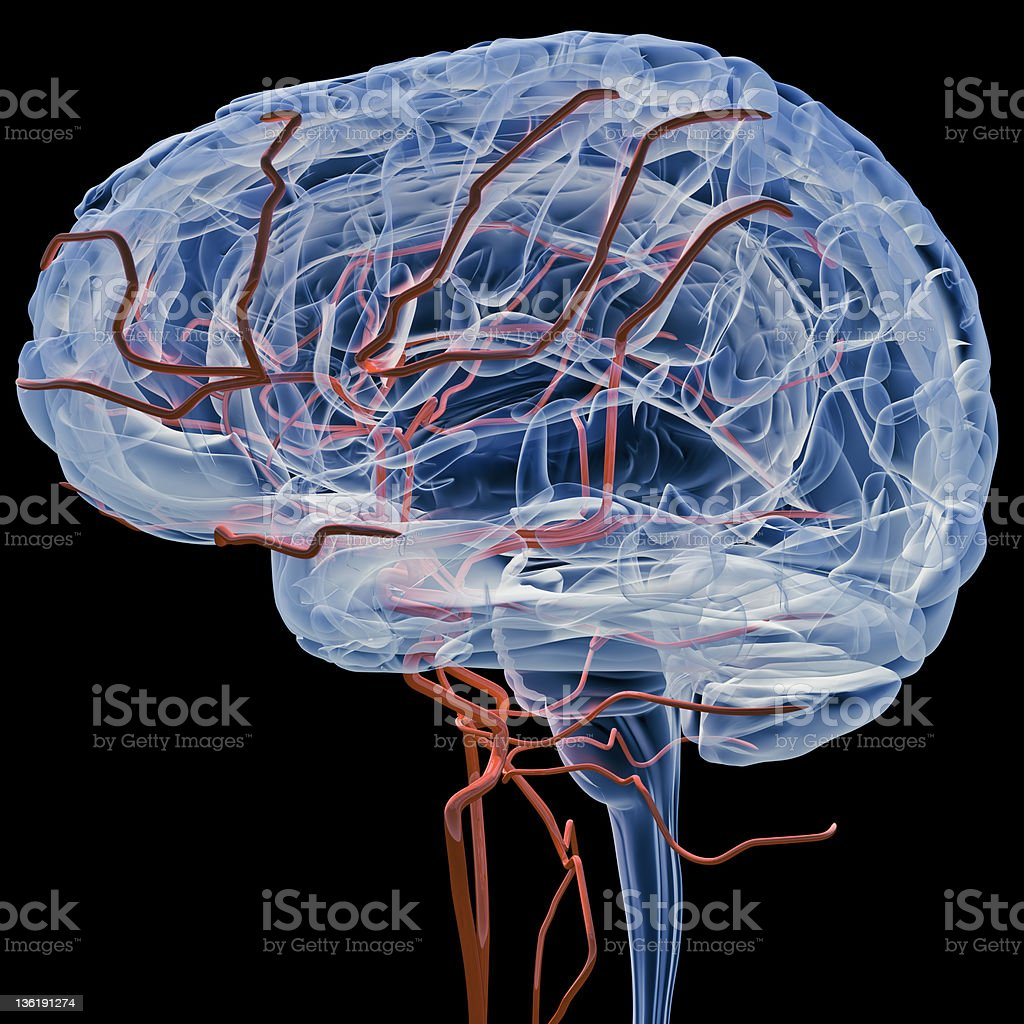 Brain with bloodvessels x-ray (Side) stock photo