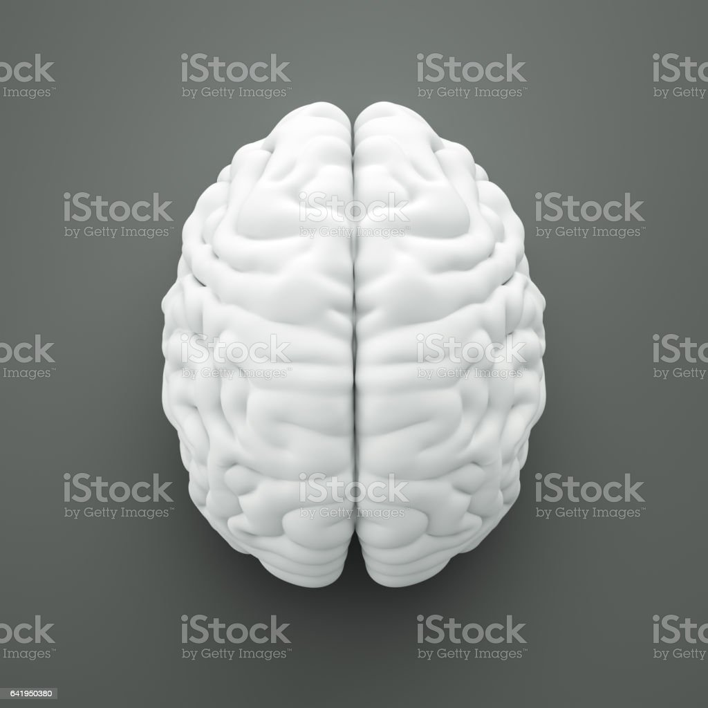 Brain with clipping path stock photo