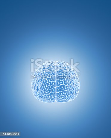 Model of a human brain on blue background.