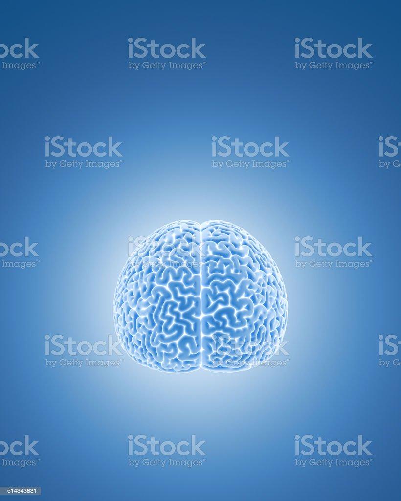 Brain XL+ stock photo