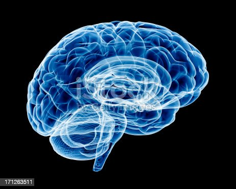 X-Ray of human brain. Transparent and detailed with soft blue swaps.