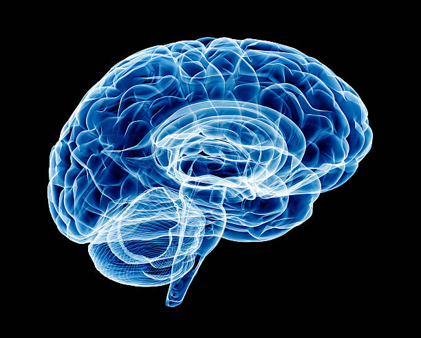 Brain X-ray (HUGE) X-Ray of human brain. Transparent and detailed with soft blue swaps. brain stem stock pictures, royalty-free photos & images