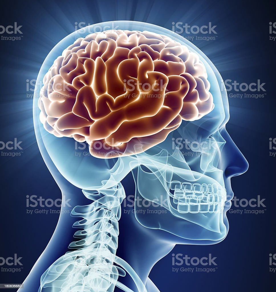 Brain x-ray stock photo