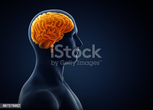 istock brain xray 667379952