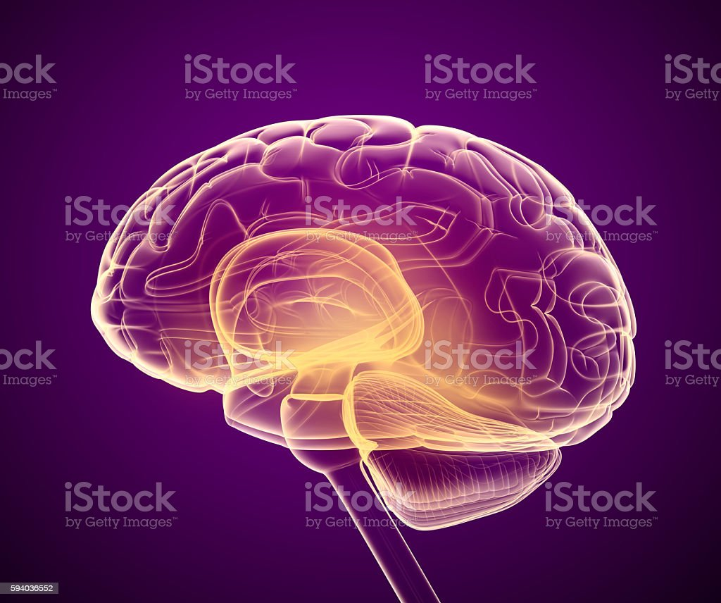 Brain x-ray scan , Medically accurate 3D illustration royalty-free stock photo