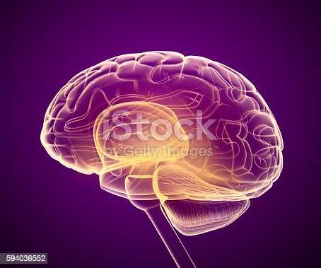 istock Brain x-ray scan , Medically accurate 3D illustration 594036552