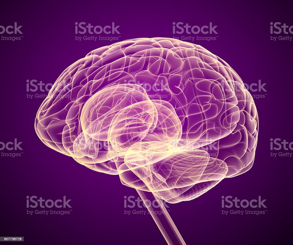 Brain x-ray scan , Medically accurate 3D illustration stock photo