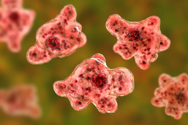 Brain-eating amoeba infection, naegleriasis stock photo