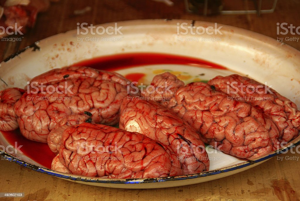 Brains And Flies stock photo