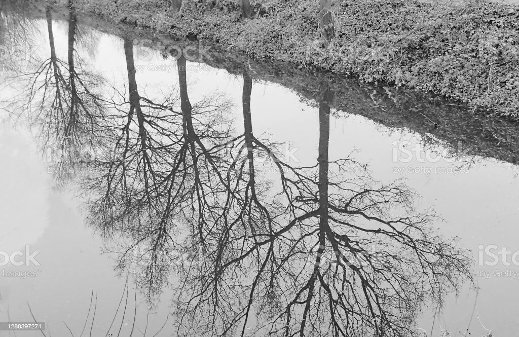 Brampton nature reserve Lake at Brampton, Cambridgeshire, England, UK. It is an overcast day with tree reflections in the lake. 2020 Stock Photo