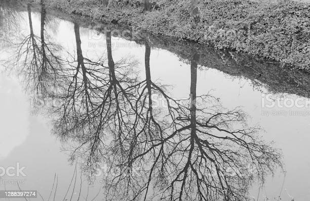 Brampton Nature Reserve Stock Photo - Download Image Now