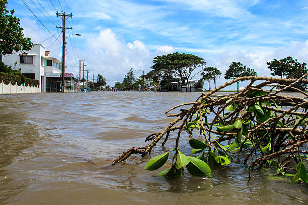 Branch Broken by Flood Waters in the Suburbs stock photo